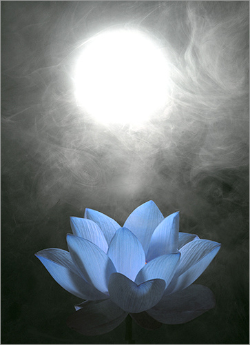 Blue Lotus by Bahman Farzad