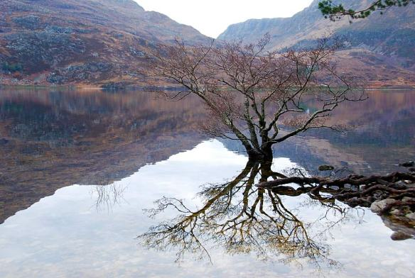 Reflections Loch Maree