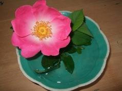16 wild rose