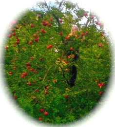17 in appletree 2jpg