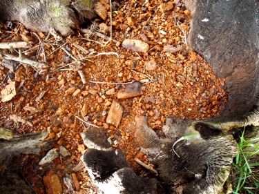 4 inside a hollow tree