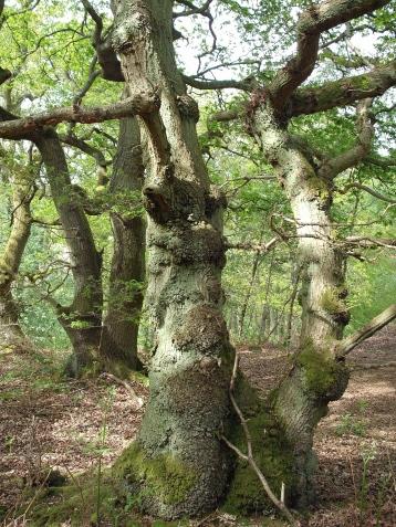 9 oaks at play