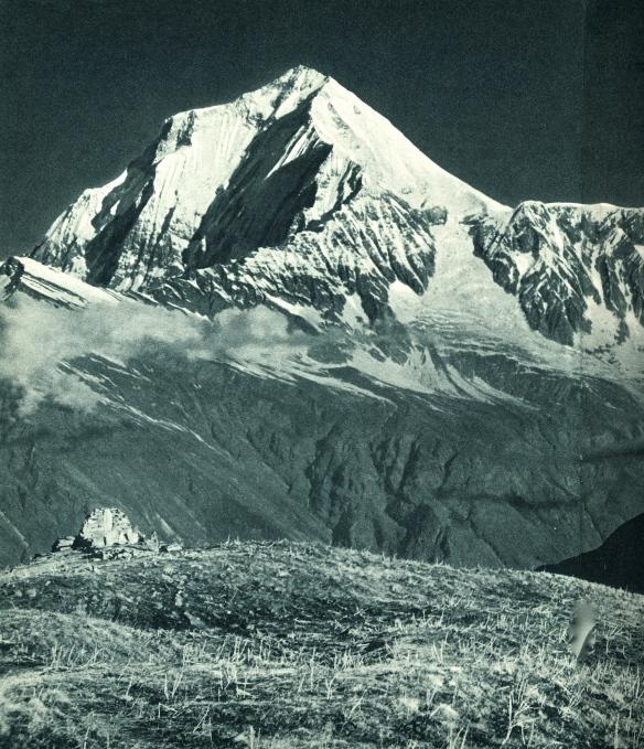 Dhaulagiri, 1950