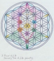 15 the tree in flower of life ja