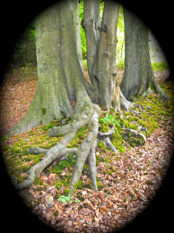 roots at broomlands