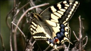 _48021123_swallowtail_butterfly_512