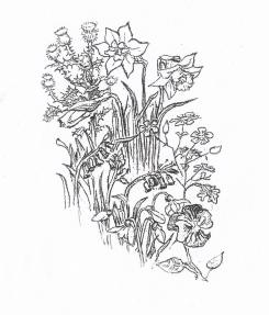 thistle & flowers