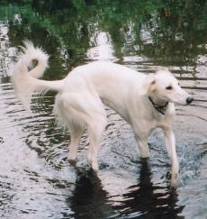 Dubi in water