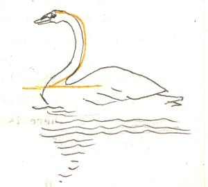 swan beit
