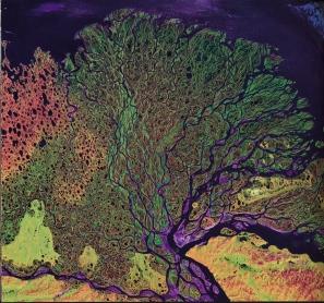 delta, veins - river lena, russia