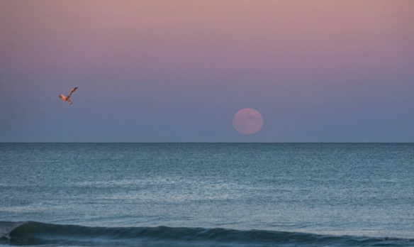 ocean-seagull-Josh-Blash-10-18-2013-Rye-NH-e1388406612861