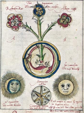 Ourobouros flower - Roob alchemy-mysticism