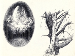 cosmic egg & tree