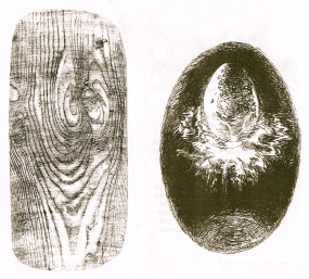 cosmic egg & wood grain - Version 2