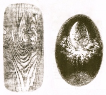 cosmic egg & wood grain - Version 2