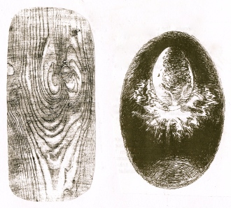 wood grain & cosmic egg