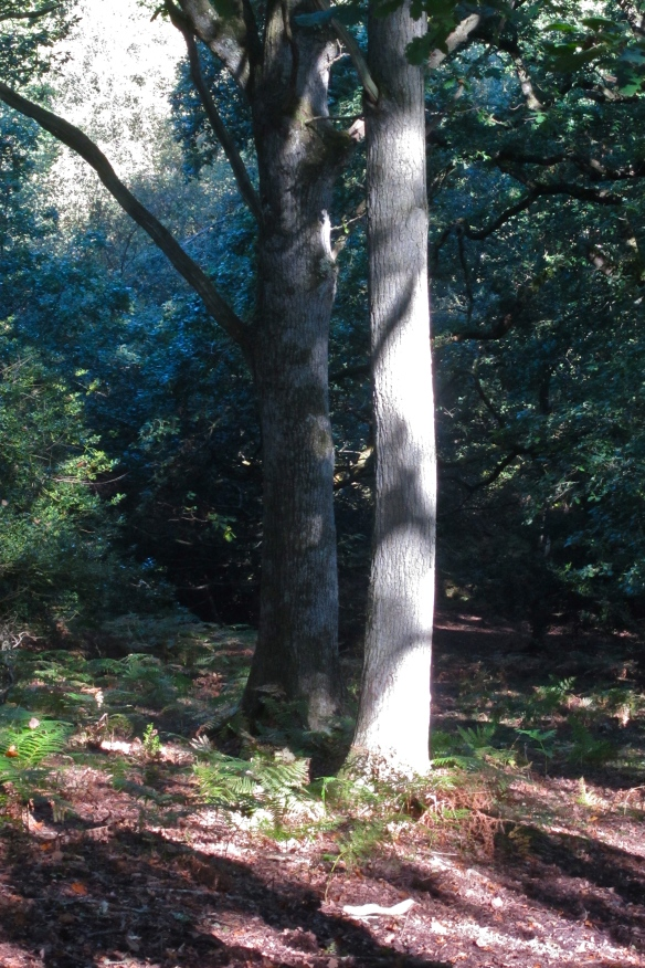 quantock trees