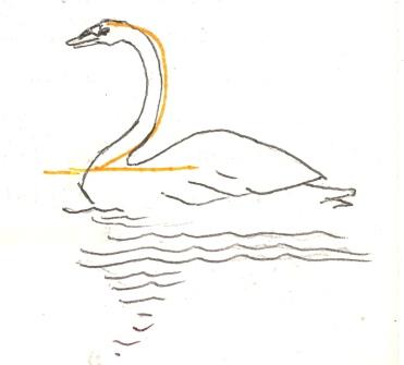 swan beis