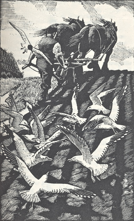 Seagulls and plough - woodcut by Tunnicliffe