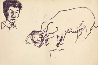 55 pestalozzi pig on dartmoor