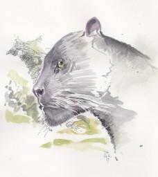 32 panther 1