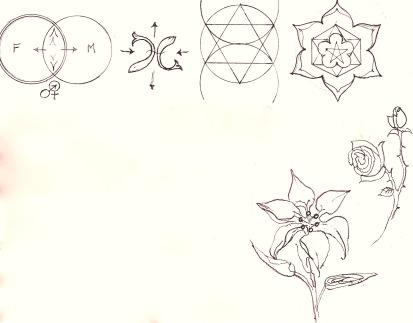Lilyrose 1 copy II
